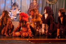 CATS, 2009